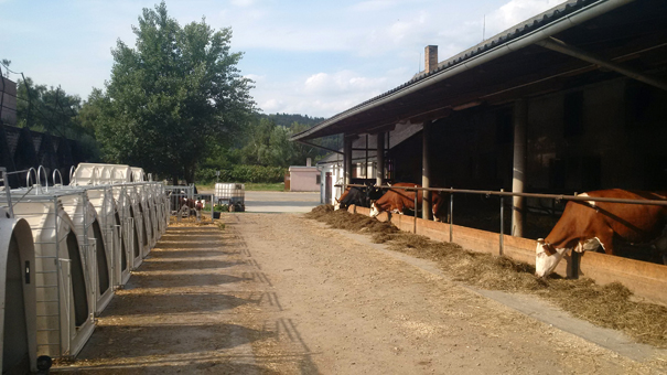 Farma Kořínek, Velká Lhota